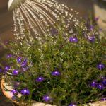 podlewanie kwiatów